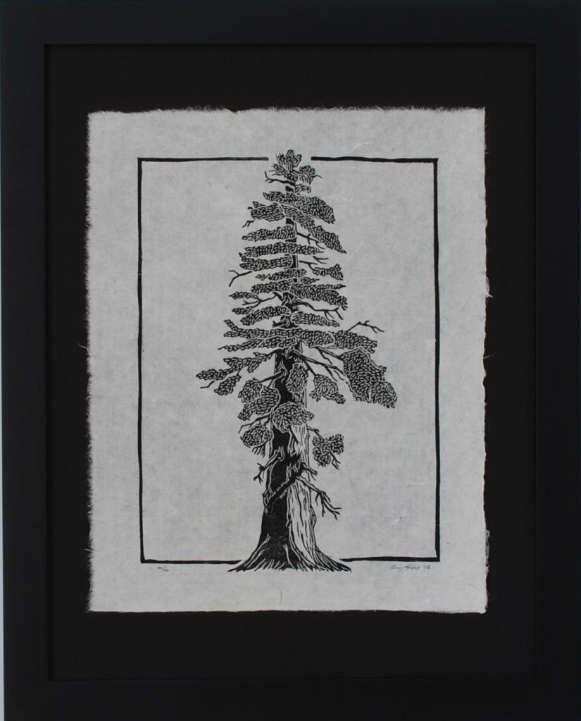 Black Redwood